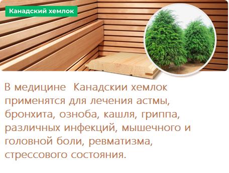 деревина хемлок.png